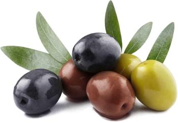 Elbak Oliven Konserviert